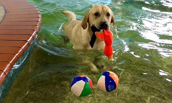 indoor dog swimming pool bow wow beach club houston tx urban tails